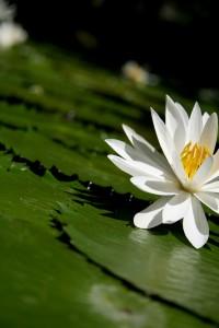 lotus-series-03-1376161-1280x1920